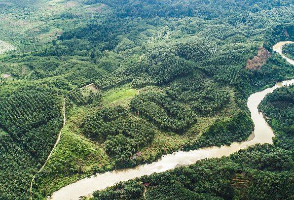 A ban on deforestation for UK supermarkets?