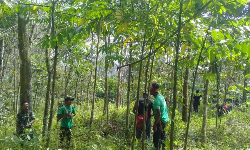 Restoring the forest in Gunung Leuser.