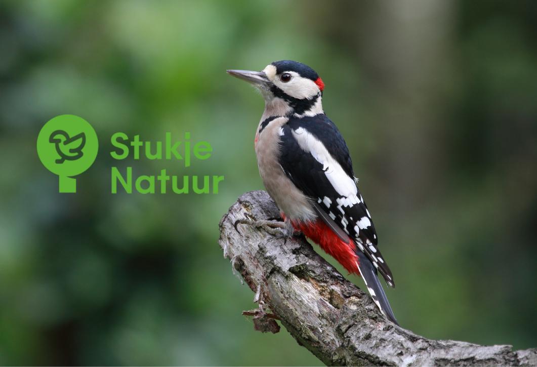 Introducing: StukjeNatuur