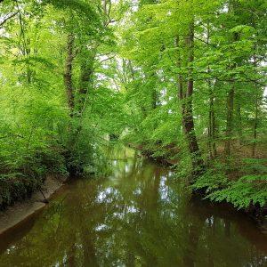 Bomenplant op Landgoed De Meuleman in Lutte (Overijssel, NL)