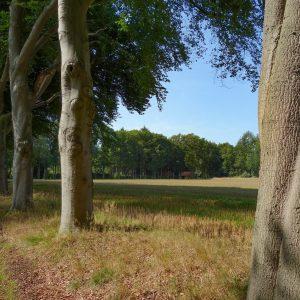 Bomenplant op Landgoed Prattenburg (Utrechtse Heuvelrug)